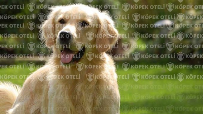 Evinizi aratmayacak köpek oteli: Bahçelievler köpek oteli