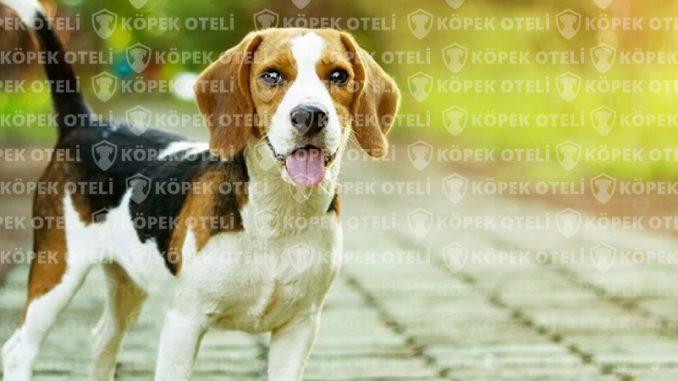 Ataşehir'de Köpek Oteli