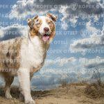 Arnavutköy köpek oteli ile rahat olun