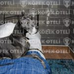 Beykoz'da en iyi köpek oteli
