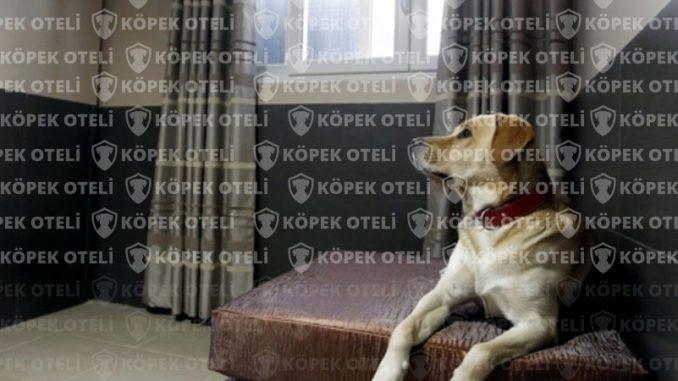 Büyükçekmece'de köpek oteli