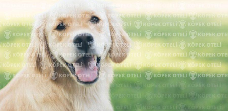 Beyoğlu köpek oteli ile içiniz rahat etsin