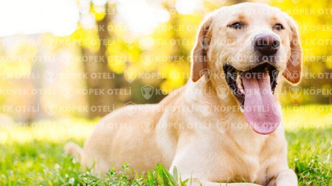 Beylikdüzü köpek oteli