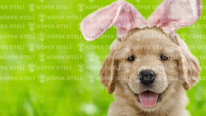 Beşiktaş'ta en güzel köpek oteli