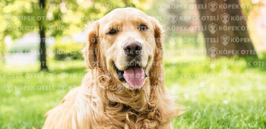Bayrampaşa'da köpek oteli