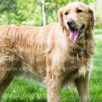 Başakşehir'de güvenilir köpek oteli