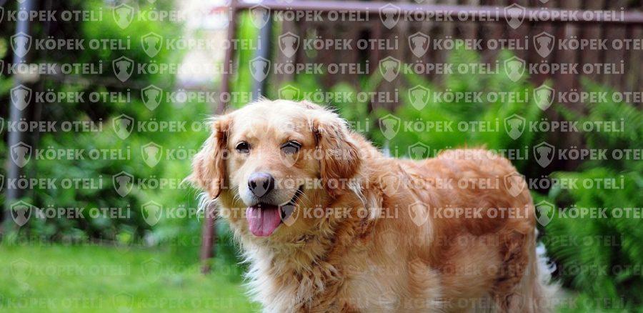 En Rahat Pet Oteli; Bakırköy köpek oteli