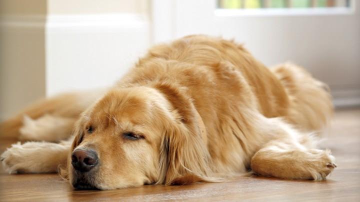 Köpek Oteli Seçerken Nelere Dikkat Etmelisiniz?