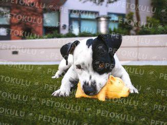 En İyi Köpek Oteli