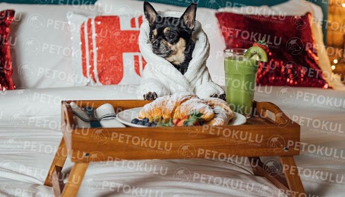 Köpek oteli ve sosyalleştirme
