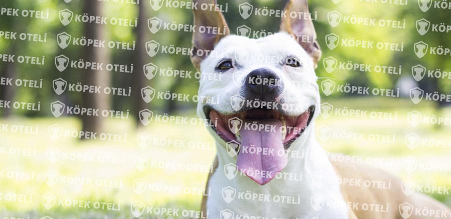 İstanbul Köpek Pansiyonu; Özel Etkinlikler Köpeğiniz Tatilde Hissedecek