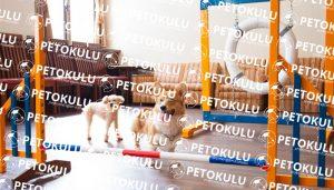 Köpek Otelleri Kafes Sisteminden Arındırılmalıdır
